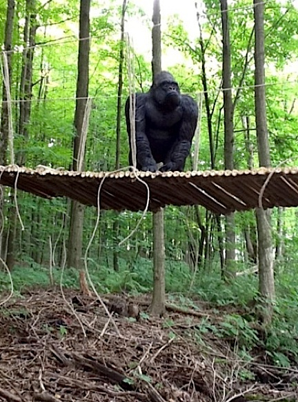 This incredibly powerful image was created with Angelo's outstanding bamboo/rope bridge...and a rubber gorilla. But BOY, is it GREAT! (Photo: Angelo D'Annibale)