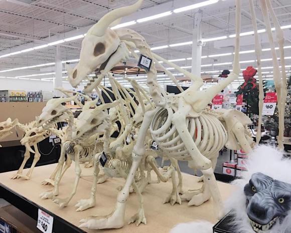skeletons3
