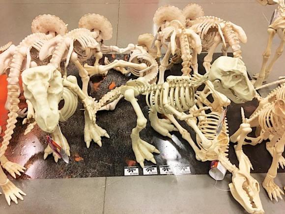 skeletons6
